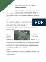 enfermedades de mayor importancia en el cultivo de cucurbitáceas.docx