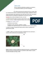 trabajo práctico biología 3.docx