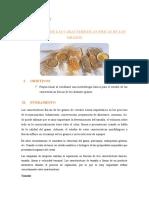 PRACTICA-N-1.docx