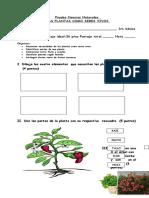 PRUEBA-DE-CIENCIAS-NATURALES-LAS-PLANTAS-doc