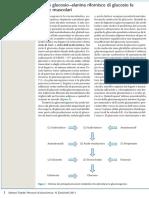 ciclo glucosio alanina