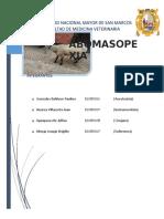 ABOMASOPEXIA PARAMEDIANA 2019