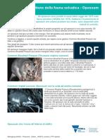 Italian_86266-p1-translations-managing-wildlife-possums