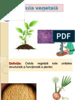 0_celula_vegetala.ppt