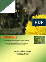 inflorescencia_2017 final