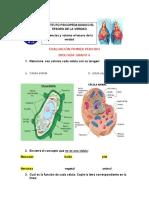 evaluacion  biologia 1