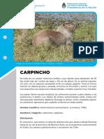 ficha-carpincho72