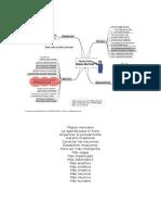 mapas_mentales_organizacion_dinamica_del.doc
