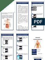 TRIPTICO ESTRELLA Sistema Digestivo - Imprimir.docx