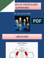 ANATOMIA DE PREMOLARES SUPERIORES - copia