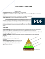 food chain worksheet  1