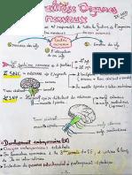 Généralités organes nerveux