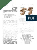 Articulación temporomandibular ATM-1.docx