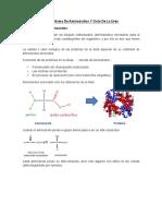 METABOLISMO_AMINOACIDOS[1].pdf