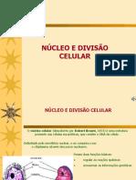 divisocelular-120826115452-phpapp02