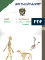 OSTEOLOGIA MAMIFEROS 2017  .pdf