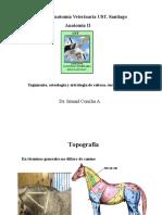 004-2011 AV2-Osteol,artro,Cab-Cue-Tronco-EQUINO.pdf