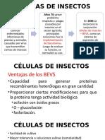 Cultivo de células de insectos