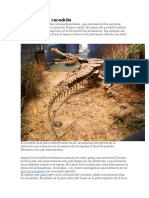 Evolución del cocodrilo resumen