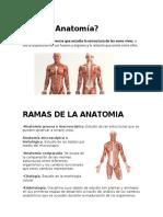 Qué es Anatomía, ramas, sistemas, aparator y aplicaciones.docx