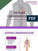 8°-Sistema-cardiovascular