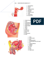 anatomia sexualidad