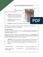 CLASIFICACION DE LOS DIFERENTES TIPOS DE SUELOS 3.1
