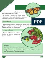 Insecte - Fise informative