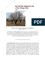 CASA DE DIOS ENTRE ÁRBOLES DE ALMENDRO