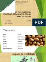 Cultivo de papa2.pdf