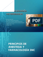 13.Anestesia