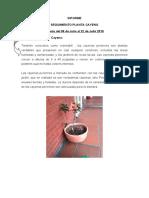 INFORME DEL CAYENO DEL 10 DE JULIO AL 22 DE JULIO 2019