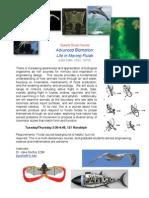 Biomotion Flyer 2011-Grad
