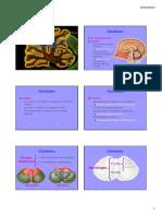 Aula 7 - Anatomia Macroscópica Do Cerebelo