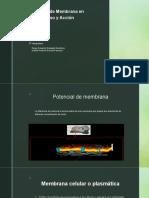 potencial de la membrana y membrana en reposo.pptx