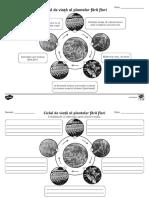 Ciclul de viata al plantelor fara flori - Fise de activitate  alb-negru