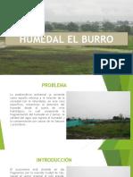 Humedal El Burro (1)