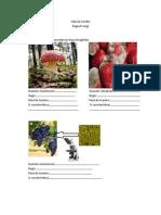 FISA DE LUCRU-Regnul Fungi