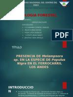 PATOLOGIA FORESTAL EXPOSICIÓN