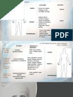 Sesión II, La triformación del cuerpo.pptx