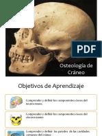 Clase 10 y 11 Osteologia de Craneo, Cara y Cav Comunes