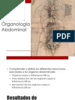 Clase 25 Organologia Abdominal