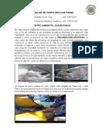 informe de campo animal.docx