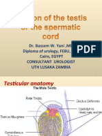 urology_37_torsion_of_the_testis_or_of_the_spermatic.ppt