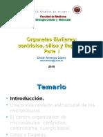 Organelas_fibrilares_2010