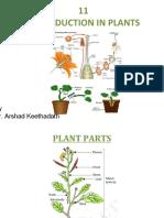 cbsegrade7-chapter11reproductioninplants-170308085837.pdf