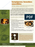 Champignons Fores Tiers Comestibles - Fiches Multiressource