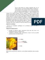 morfologuia floral