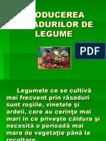 producerea_rasadurilor_de_legume.pps (1).ppt