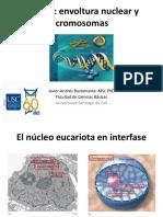 CLASE 4_Nucleo, envoltura nuclear y cromosomas.pdf